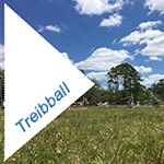 Treiball Class at Mikamar Training Center