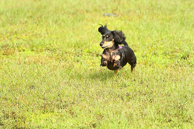 Pepper running