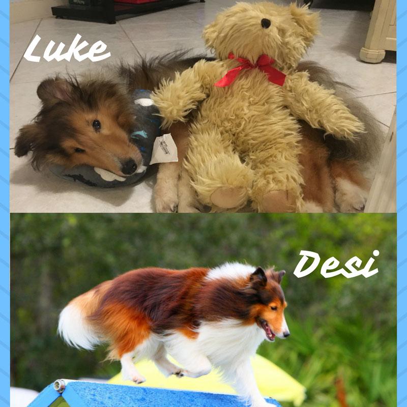 Luke Desi